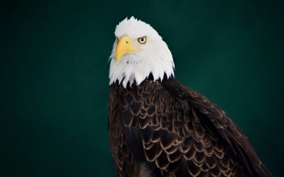 Eagles and Hearing the Voice of God